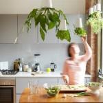 5 สมุนไพรก้นครัว สุดยอดอัศวิน ปกป้องบ้าน