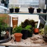 Cara Membuat Taman Mungil Terarium