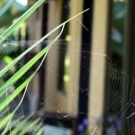 Langkah Mudah Rumah Bebas Sarang Laba-laba