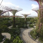 Supertrees Gardens by the Bay resize