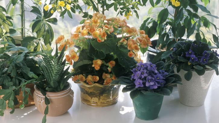 10 Manfaat Tanaman Pot Di Dalam Rumah Rumah Dan Gaya Hidup Rumah Com