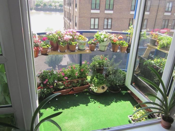 Tanam bunga menggunakan pot dan pastikan pot memiliki alas untuk menyimpan kelebihan air.
