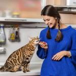 bau pipis kucing menyengat