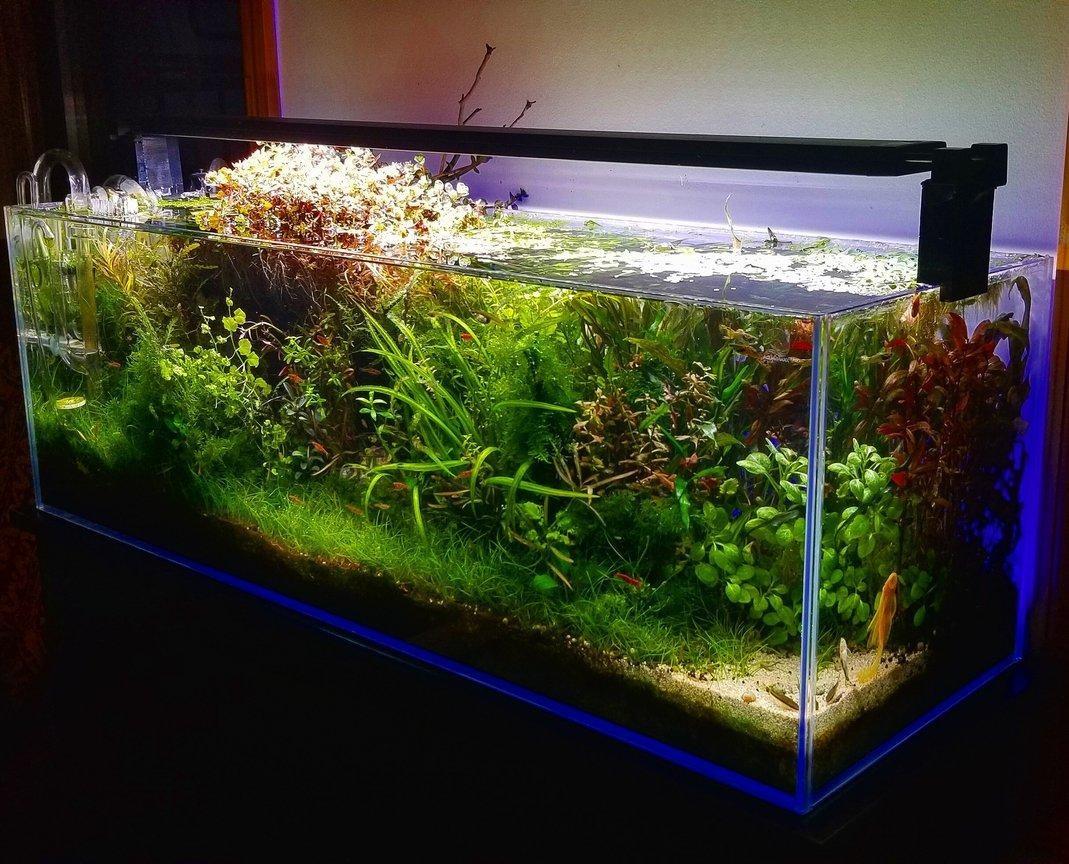 Inilah Manfaat Luar Biasa Memasang Aquarium Di Rumah Rumah Dan Gaya Hidup Rumah Com