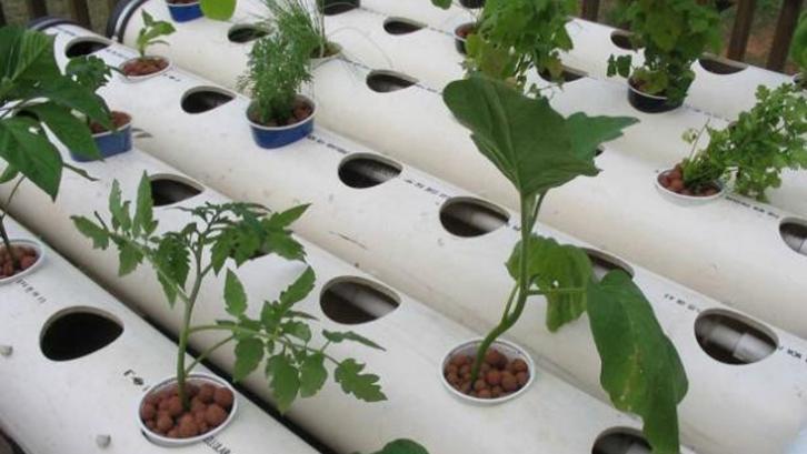 Langkah ke-6 : Pantau Pertumbuhan Tanaman Hidroponik