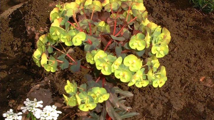 3. Pilih tanaman yang akan ditanam