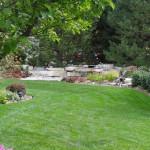 Rumput pilihan untuk halaman rumah