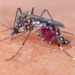High cases of Dengue persist, with landed homes being the hardest hit: NEA