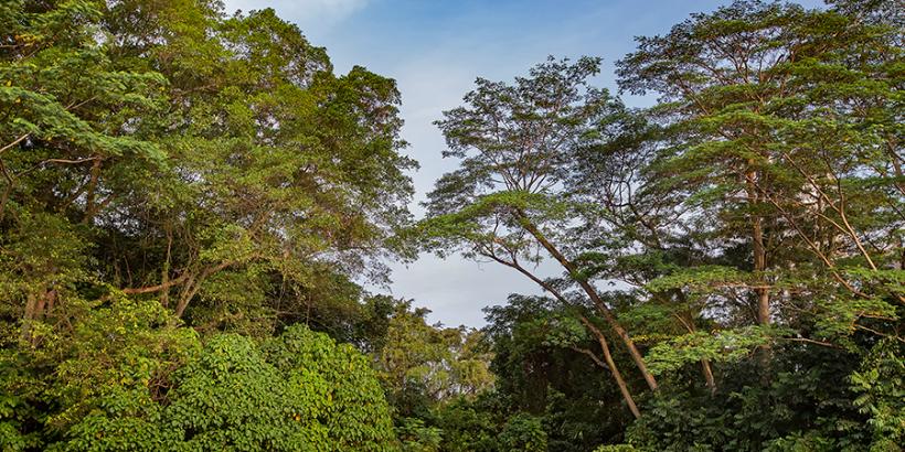 Singapore Geographic, Singapore Nature, Singapore Nature Photography