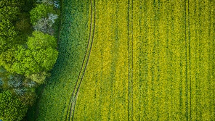 Girik tanah merupakan surat kuasa atas lahan. (Foto: Pexels – Stephan)