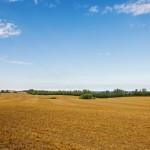 Ulasan Tanah Girik dan Cara Mengurusnya di Kantor BPN Setempat