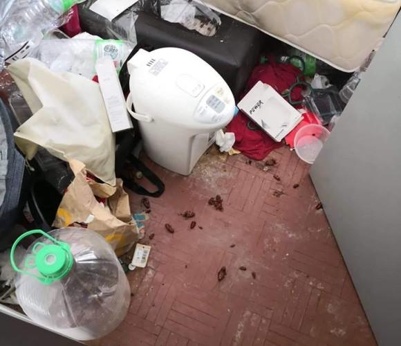 pest control, ants, lizard, cockroach, termite infestation, rats problem, extermination services malaysia