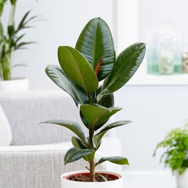 Indoor plants, house plants, best indoor plants, Interior design ideas