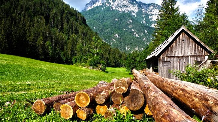 Kayu pinus merupakan jenis kayu yang sering menjadi bahan baku furnitur. (Foto: Pexels – Pixabay)