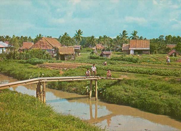 A vegetable farm in Punggol in the 1970s - PropertyGuru Singapore