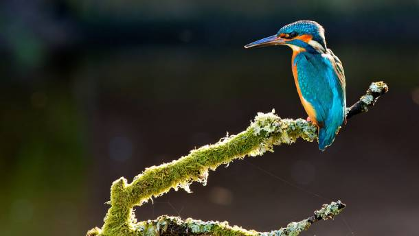 Kingfishers can commonly be sighted in Punggol Waterway Park - PropertyGuru Singapore