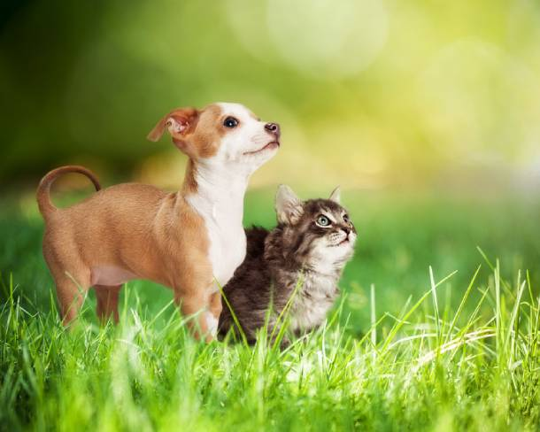 Pets can be covered by home insurance
