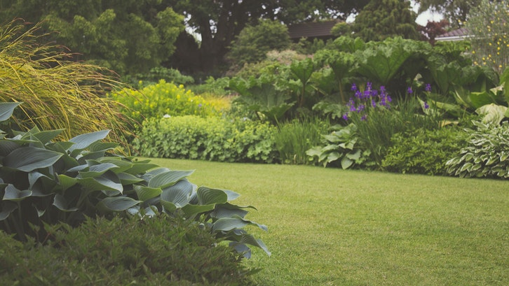 Taman belakang rumah minimalis menghadirkan harmoni dan ketenangan. (Foto: Pexels-Creative Vix)