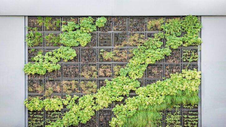 Taman belakang rumah minimalis vertikal dapat menjadi solusi jitu di lahan terbatas (Foto: Unsplash-Paweł Czerwiński)