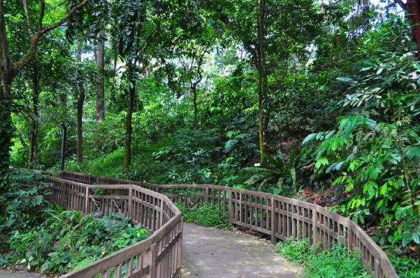 Bukit Timah Nature Reserve's forested trails - PropertyGuru Singapore