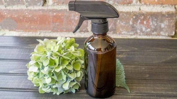 Anda bisa membuat sendiri semprotan pengusir cicak dari bahan-bahan alami sebagai cara mengusir cicak yang aman. (Foto: Naturallivingideas.com)