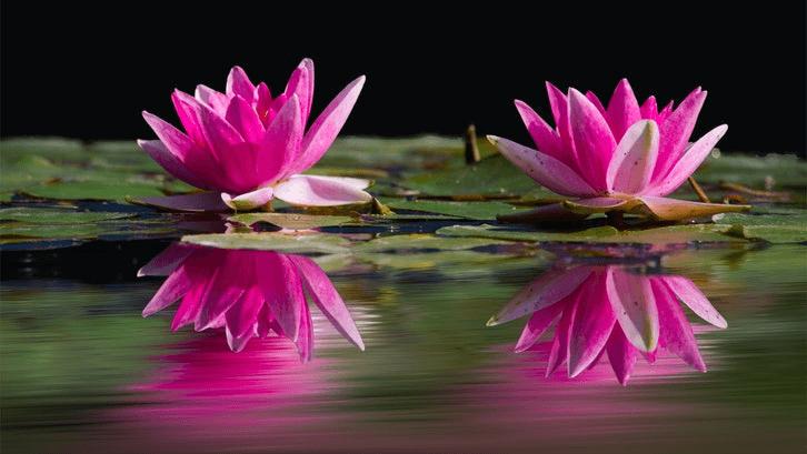 Tanaman pada kolam menambah keasrian. (Foto: Pixabay)