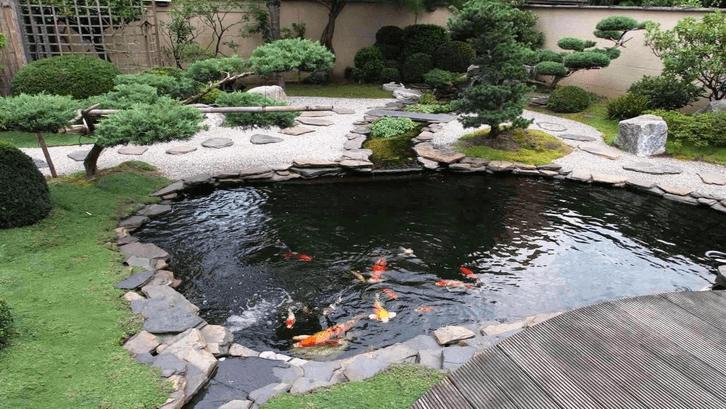 Bonsai pada kolam gaya jepang menambah keindahan. (Foto: Tuffarm.com)