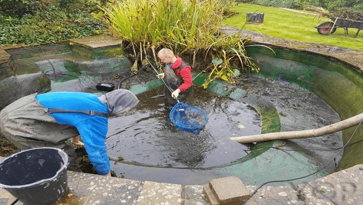 Kolam perlu dibersihkan dengan teratur. (Foto: ygpservices.com)