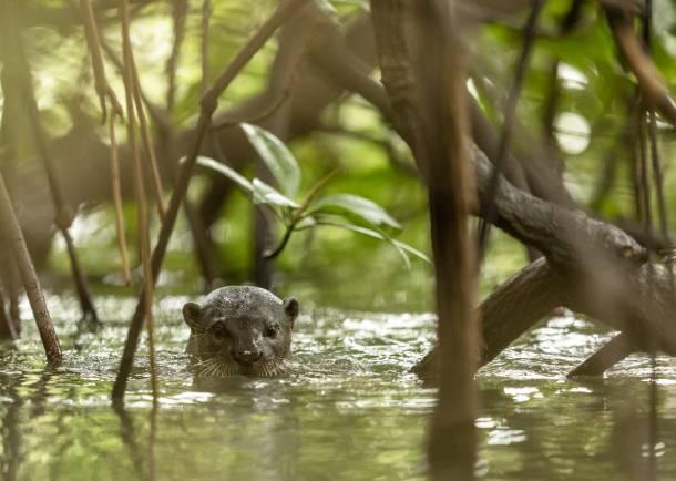 Animals are much more sensitive to sound compared to us near Cross Island Line – PropertyGuru Singapore