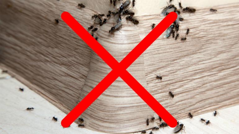 Semut, Cara halau semut, Petua halau semut, semut api, semut mayat, racun semut