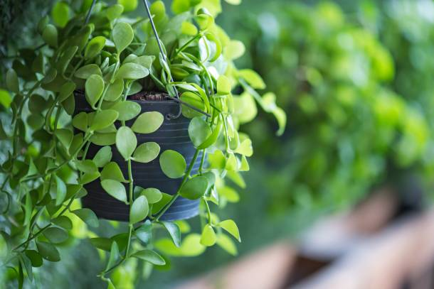 Liven up your service yard area by installing a vertical garden – PropertyGuru Singapore