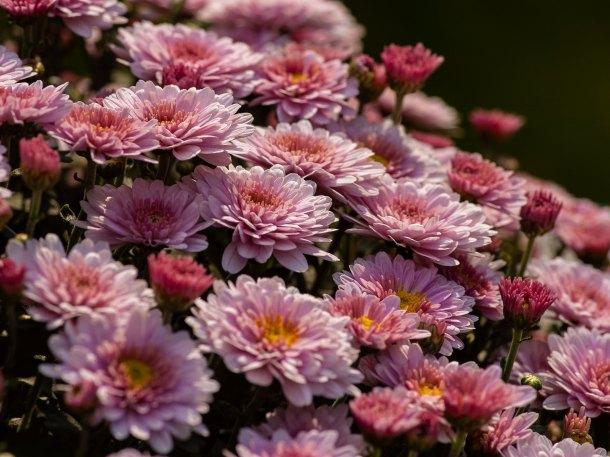 Macam Macam Bunga Hias Cantik Untuk Pekarangan Rumah Rumah Com