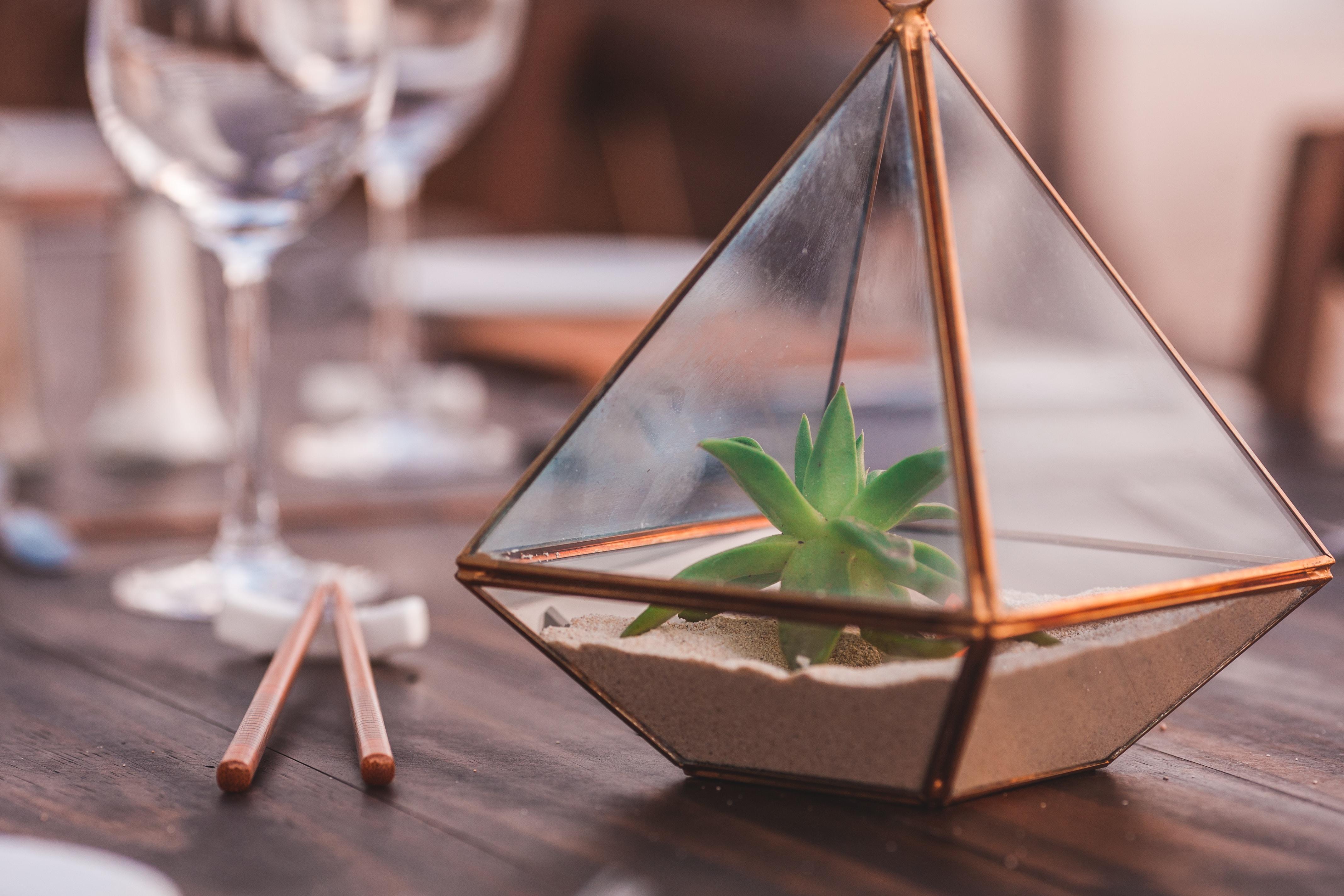 Pilih wadah terarium berbahan kaca atau plastik bening agar cahaya bisa masuk ke dalamnya. (Foto: Unsplash)