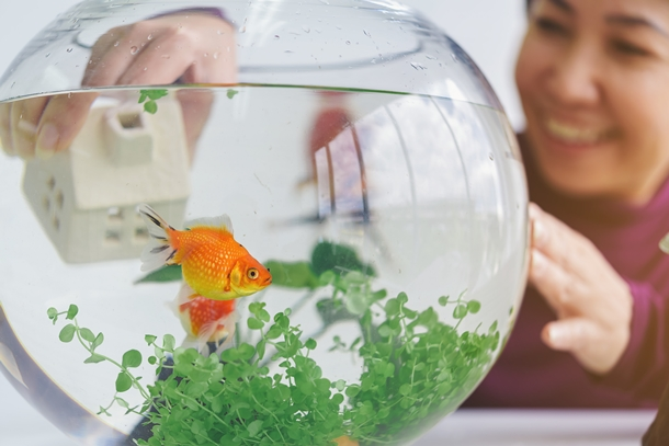 ตู้ปลาทอง หนึ่งในของมงคลตกแต่งบ้าน