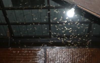 กำจัดแมงเม่า แมลงเม่า ด้วย 5 วิธีง่าย ๆ ก่อนเป็นปลวกร้ายทำลายบ้าน