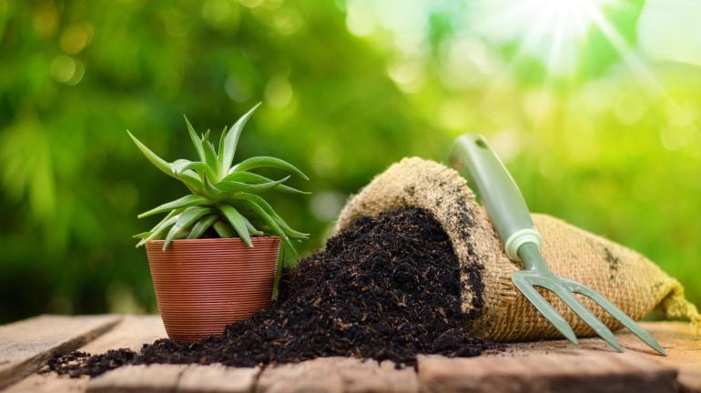 8 Jenis Pupuk Organik Untuk Tanaman di Rumah