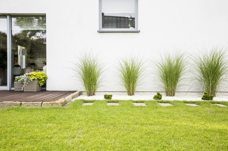 รู้จักหญ้า 4 ชนิด หญ้านวลน้อย หญ้าญี่ปุ่น หญ้ามาเลเซีย หญ้าเบอร์มิวด้า