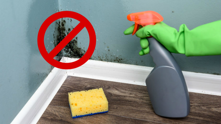 10 Steps On How To Remove Mould And Mildew From Your Home Effectively!