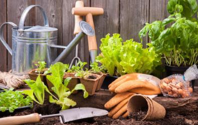 tanaman, bercucuk tanam, tanaman dalam rumah, jenis tanah untuk tanaman, berkebun di rumah, tanaman yang menguntungkan di Malaysia, cara tanam serai dalam pasu, tanam