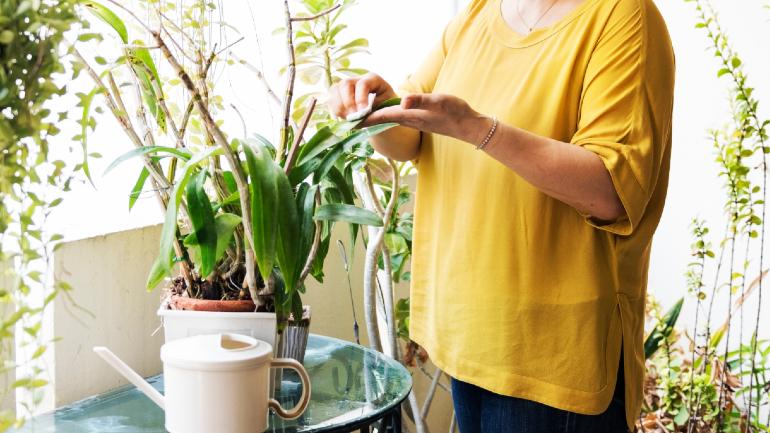 tumbuhan hiasan, pokok hiasan dalam rumah, jenis pokok hiasan, pokok hiasan rumah