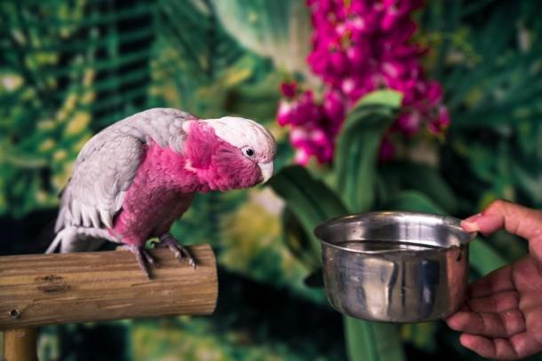 bird as a pet - Copy