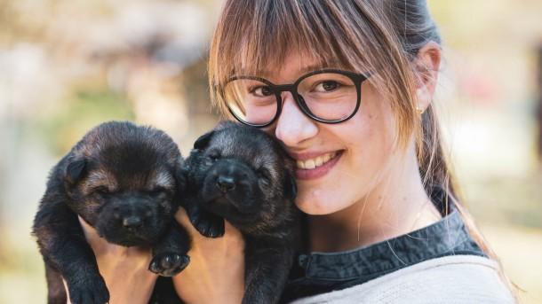 dog pups - Copy