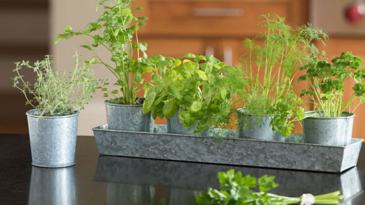 Tanaman herbal bisa tumbuh dengan mudah dan tidak membutuhkan perawatan yang sulit. (Foto: Gardener's Supply)