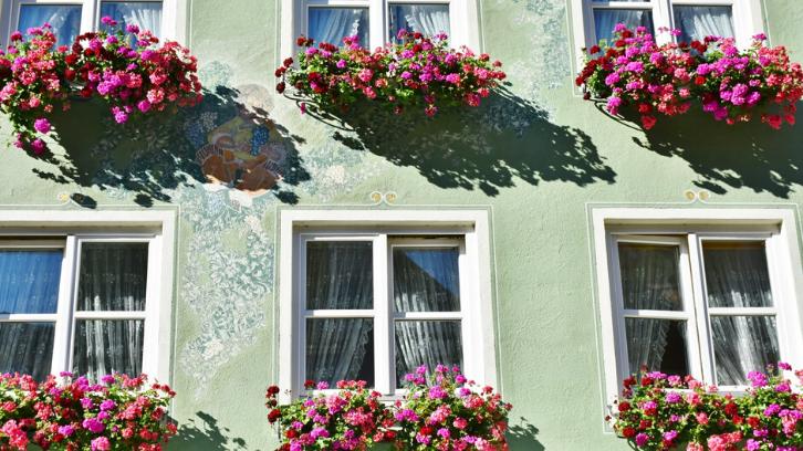15 Tanaman Gantung Hias Untuk Percantik Rumah