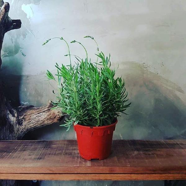 shops-deliver-plants-12 (1)