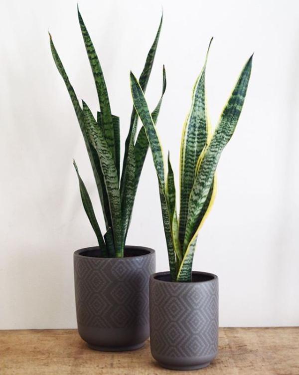 shops-deliver-plants-13 (1)