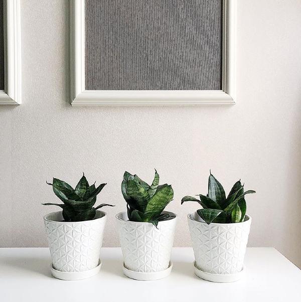 shops-deliver-plants-20 (1)