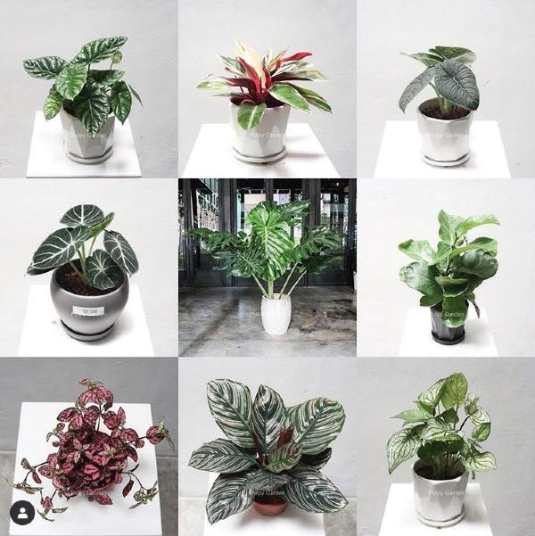 shops-deliver-plants-22 (1)