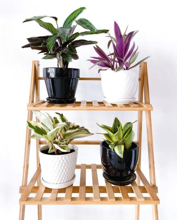 shops-deliver-plants-26 (1)