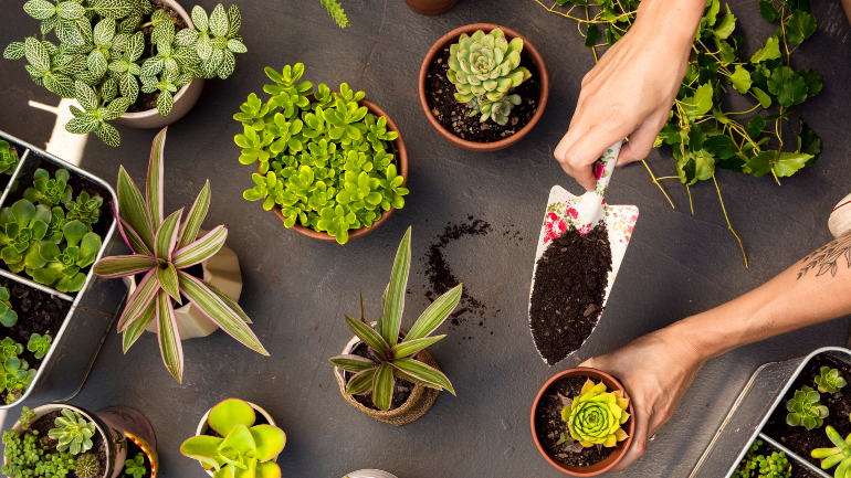 These 13 Klang Valley Shops Will Deliver House Plants To You!